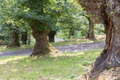 """La """"Corona di Matilde – Alto Reno terra di Castagni"""" è il primo paesaggio rurale di interesse storico-culturale dell'Appennino bolognese tutelato dal Ministero delle Politiche Agricole Alimentari e Forestali"""